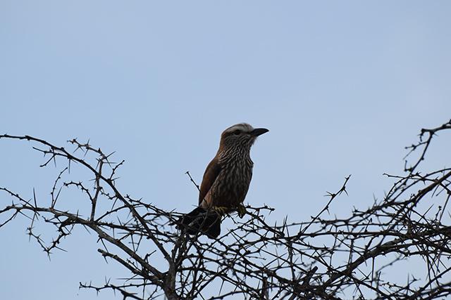 unknown bird 1